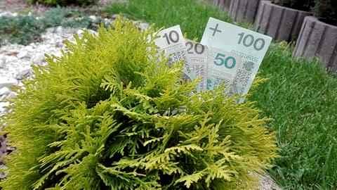 Nowe 21984204 1062205597215672 637831399 n - Zakładasz ogród? A nie wiesz gdzie kupować rośliny?