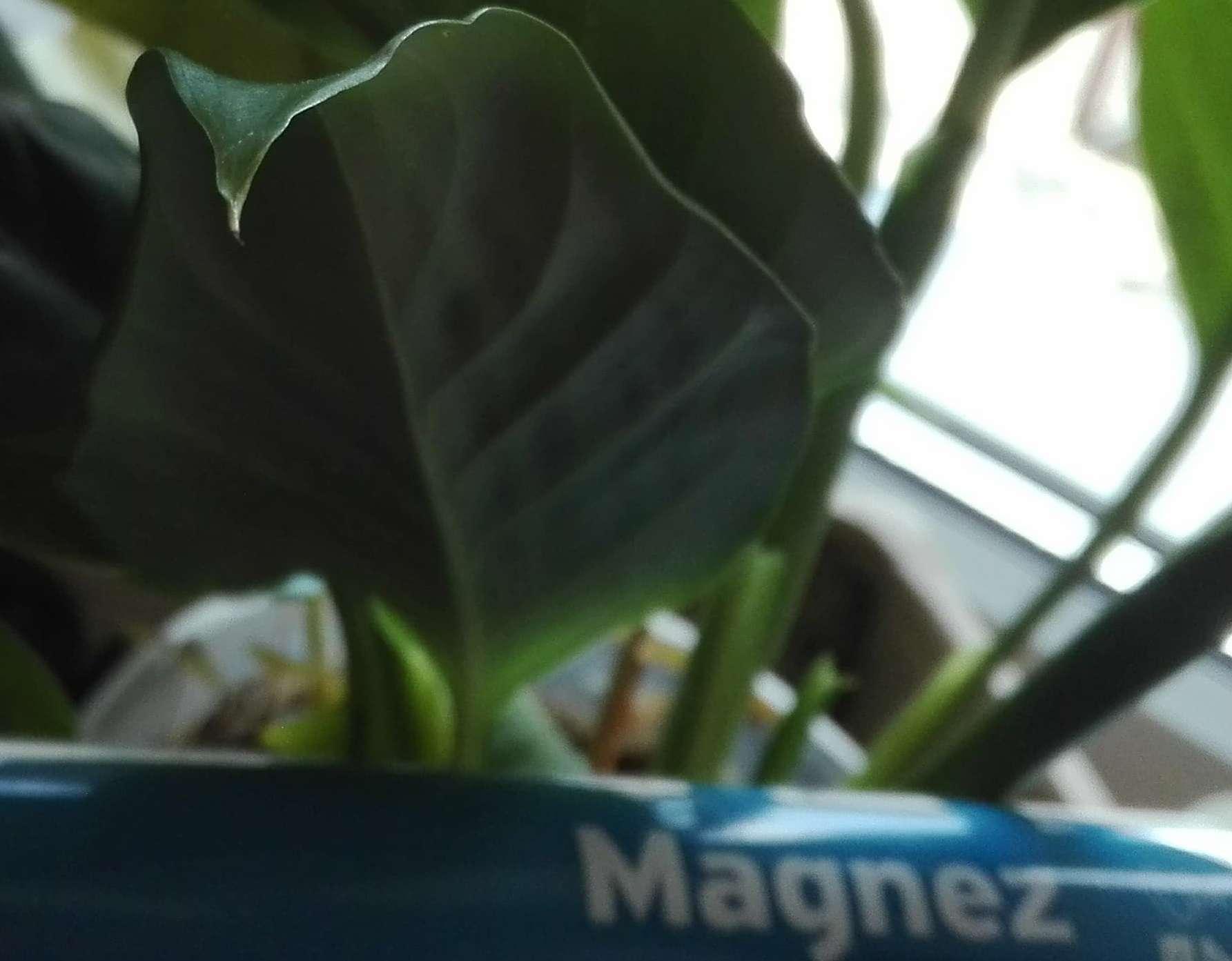 magnez-pierwiastki-dla-roslin