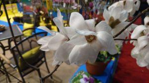 DSC 0338 300x169 - Gardenia 2020 - podsumowanie targów