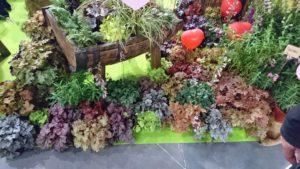 DSC 0349 300x169 - Gardenia 2020 - podsumowanie targów
