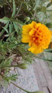 IMG 20180818 123701 168x300 - Sukulenty - rośliny idealne nasuszę