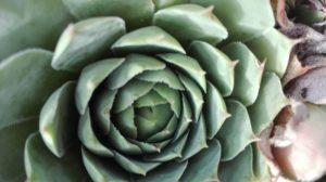 IMG 20180914 163306 300x168 - Sukulenty - rośliny idealne nasuszę
