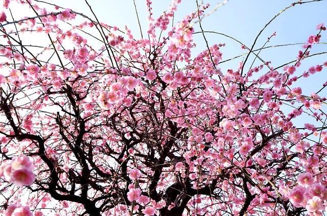 winter 1157079 640 - Ogrody japońskie - sztuka ogrodowa