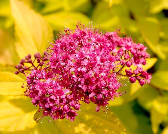 flowers 5299551 640 - Top 5 roślin doogrodu zmałymi wymaganiami
